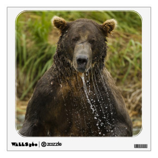 Brown bear, male, fishing for salmon wall sticker