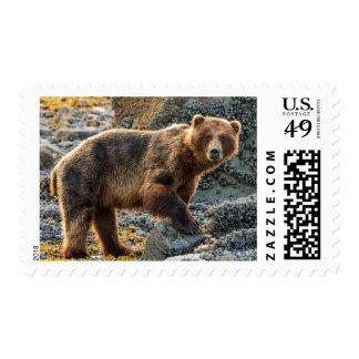 Brown bear on beach 2 postage