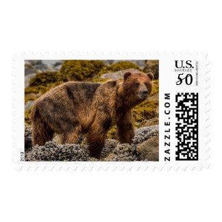 Brown bear on beach postage