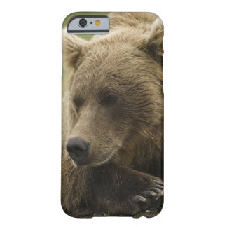 Brown bear, or Coastal Grizzly Bear, Ursus Barely There iPhone 6 Case