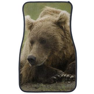 Brown bear, or Coastal Grizzly Bear, Ursus Car Mat