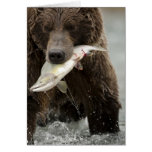 Brown bear, or Coastal Grizzly Bear, Ursus Card