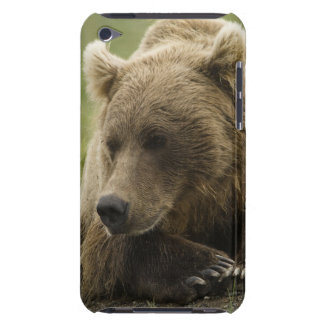 Brown bear, or Coastal Grizzly Bear, Ursus iPod Case-Mate Cases