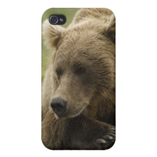 Brown bear, or Coastal Grizzly Bear, Ursus Case For iPhone 4