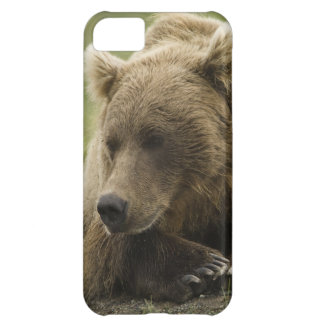 Brown bear, or Coastal Grizzly Bear, Ursus Case For iPhone 5C