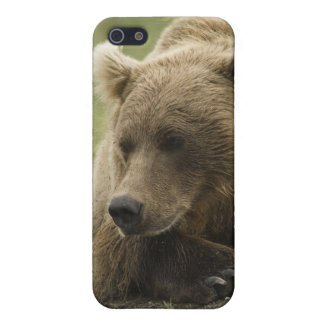 Brown bear, or Coastal Grizzly Bear, Ursus Cover For iPhone SE/5/5s
