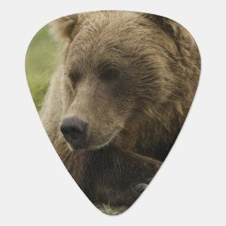 Brown bear, or Coastal Grizzly Bear, Ursus Guitar Pick