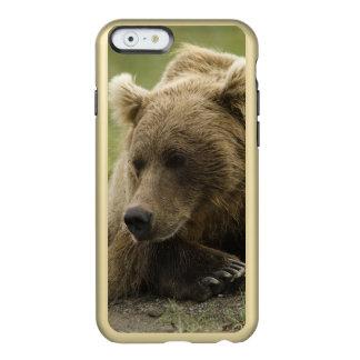 Brown bear, or Coastal Grizzly Bear, Ursus Incipio Feather® Shine iPhone 6 Case