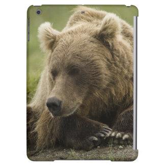 Brown bear, or Coastal Grizzly Bear, Ursus iPad Air Cases