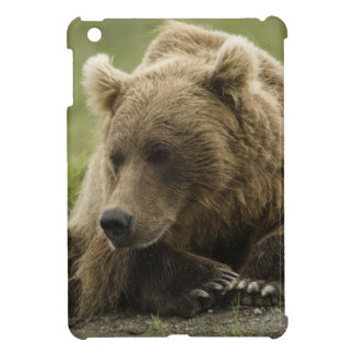 Brown bear, or Coastal Grizzly Bear, Ursus iPad Mini Case