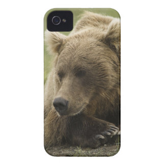 Brown bear, or Coastal Grizzly Bear, Ursus iPhone 4 Case-Mate Case
