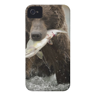 Brown bear, or Coastal Grizzly Bear, Ursus iPhone 4 Cases