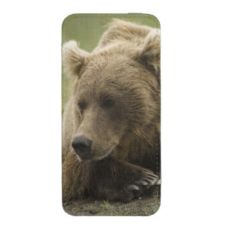 Brown bear, or Coastal Grizzly Bear, Ursus iPhone SE/5/5s/5c Pouch