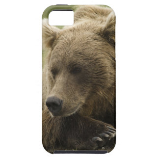 Brown bear, or Coastal Grizzly Bear, Ursus iPhone SE/5/5s Case
