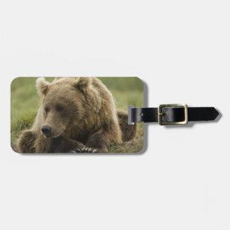 Brown bear, or Coastal Grizzly Bear, Ursus Luggage Tag