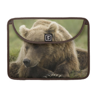 Brown bear, or Coastal Grizzly Bear, Ursus Sleeve For MacBook Pro
