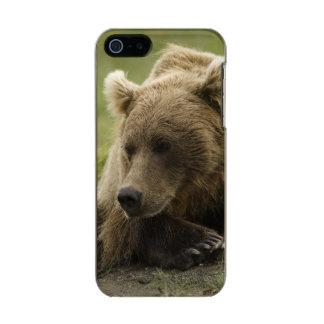 Brown bear, or Coastal Grizzly Bear, Ursus Metallic iPhone SE/5/5s Case