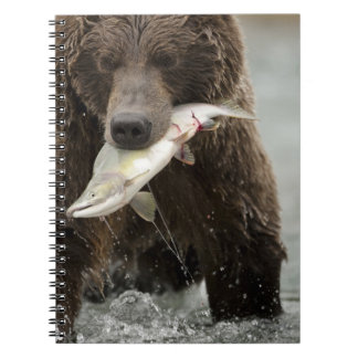 Brown bear, or Coastal Grizzly Bear, Ursus Notebook