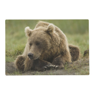 Brown bear, or Coastal Grizzly Bear, Ursus Laminated Place Mat