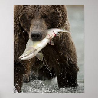 Brown bear, or Coastal Grizzly Bear, Ursus Print