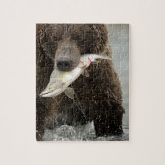 Brown bear, or Coastal Grizzly Bear, Ursus Puzzles