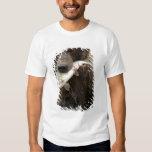 Brown bear, or Coastal Grizzly Bear, Ursus Shirt