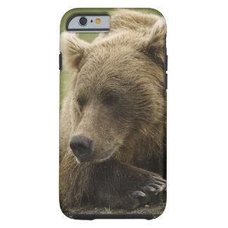 Brown bear, or Coastal Grizzly Bear, Ursus Tough iPhone 6 Case