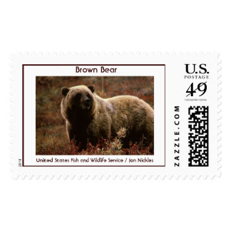 Brown Bear Stamps