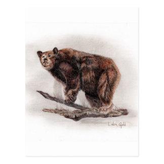 Brown Bear Postcards