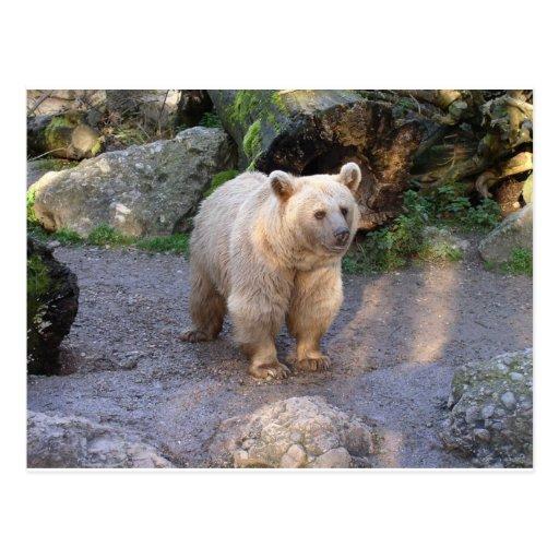 Brown bear postcard