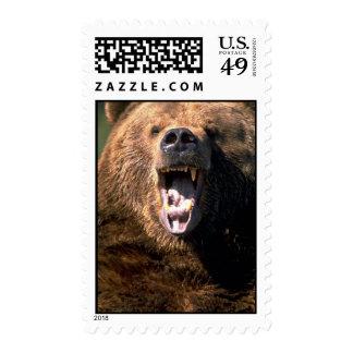 Brown Bear Showing Teeth Postage Stamps