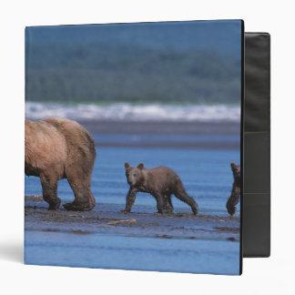 Brown Bear, Ursus arctos, Alaska Peninsula, 2 Binder