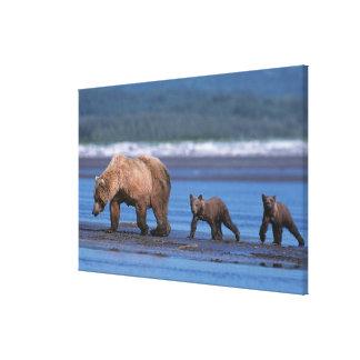 Brown Bear, Ursus arctos, Alaska Peninsula, 2 Canvas Print