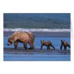 Brown Bear, Ursus arctos, Alaska Peninsula, 2 Cards