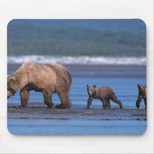 Brown Bear, Ursus arctos, Alaska Peninsula, 2 Mousepads
