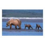 Brown Bear, Ursus arctos, Alaska Peninsula, 2 Photo Art