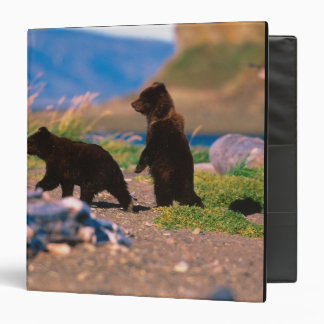 Brown Bear, Ursus arctos, Alaska Peninsula, Binder