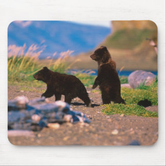Brown Bear, Ursus arctos, Alaska Peninsula, Mouse Pad