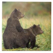 brown bear, Ursus arctos, grizzly bear, Ursus 2 Ceramic Tile