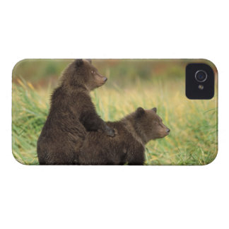brown bear, Ursus arctos, grizzly bear, Ursus 2 iPhone 4 Case