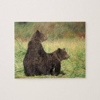 brown bear, Ursus arctos, grizzly bear, Ursus 2 Jigsaw Puzzle
