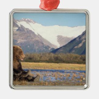 brown bear, Ursus arctos, grizzly bear, Ursus 2 Metal Ornament