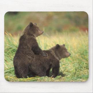 brown bear, Ursus arctos, grizzly bear, Ursus 2 Mouse Pad