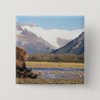 brown bear, Ursus arctos, grizzly bear, Ursus 2 Pinback Button
