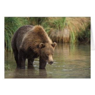 brown bear, Ursus arctos, grizzly bear, Ursus 3 Card
