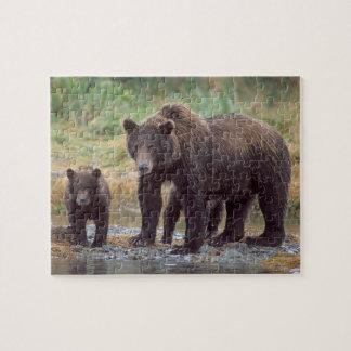 brown bear, Ursus arctos, grizzly bear, Ursus 3 Jigsaw Puzzles