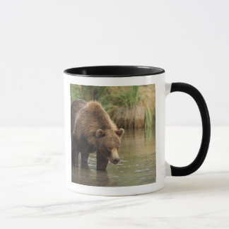 brown bear, Ursus arctos, grizzly bear, Ursus 3 Mug