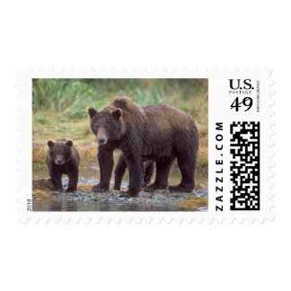 brown bear, Ursus arctos, grizzly bear, Ursus 3 Postage