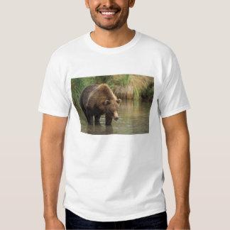 brown bear, Ursus arctos, grizzly bear, Ursus 3 T Shirt