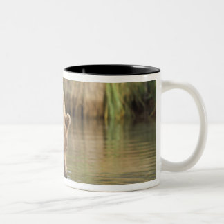 brown bear, Ursus arctos, grizzly bear, Ursus 3 Two-Tone Coffee Mug
